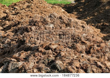 Fertilizer from cow manure and straw. Heap of manure,