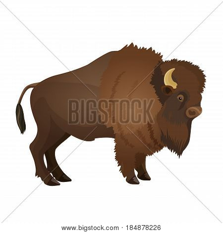 Bison large even-toed ungulate realistic vector illustration isolated on white background. Bull with horns terrestrial animal