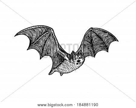Bat engraving vector illustration. Scratch board style imitation. Hand drawn image.
