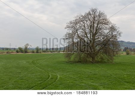 Big tree within a spring landscape next to Schwandorf in bavaria on a cloudy day