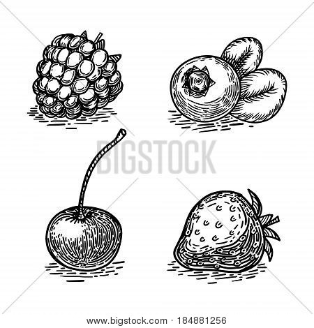 Berries sketch engraving vector illustration. Scratch board style imitation. Hand drawn image.