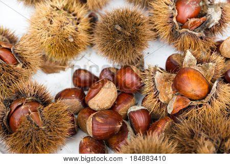 Fresh Chesnut