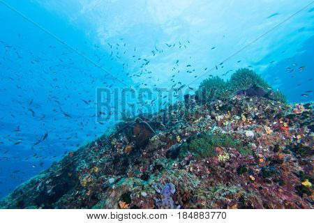 Underwater Scape Of Sea Anemone And Coral Reef