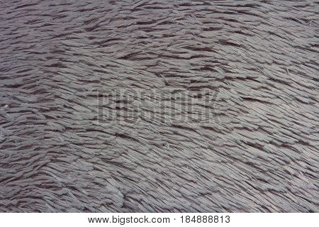 Background texture fur fur gray. Sharp hairs of fur fur gray.
