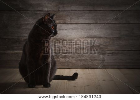 the black cat on old wooden background