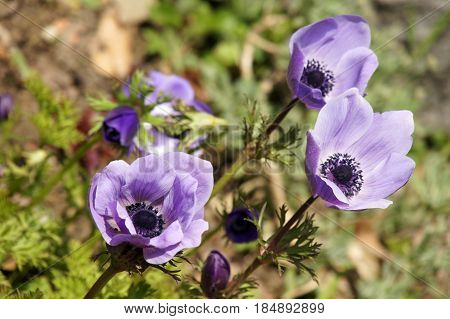 Purple flowers on green grass background. Florish sunny day natural backdrop