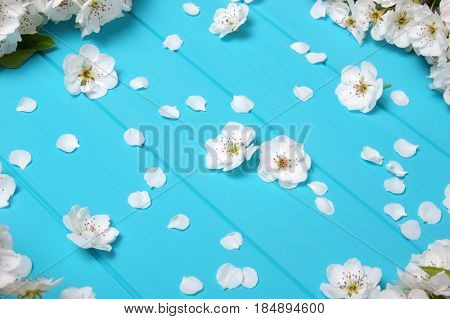 Spring blossom on blue wood background. Top view, flat lay.
