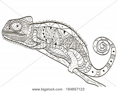 Chameleon animal coloring book for adults vector illustration. Anti-stress coloring for adult. Zentangle style lizard on a branch. Black and white lines. Lace pattern