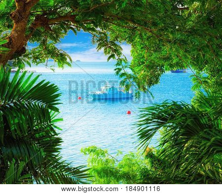 Sea view through the branches of the trees