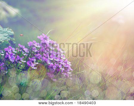 bouquet of purple flowers under the sunshine