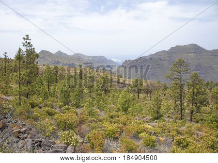 west of Gran Canaria April path around Nutural reserve Inagua pine forest