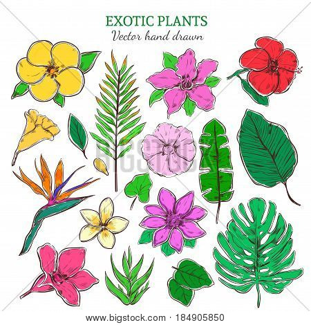 Colored exotic and tropical plants set with beautiful flowers and leaves in hand drawn style isolated vector illustration