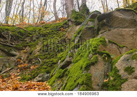 Gray stone with green moss texture background overgrown in forest