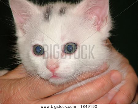 Portrait of a little kitten on person's hand. poster