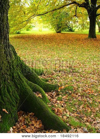 Tree trunk surrounded by autumn
