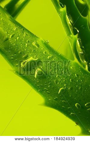 cut aloe leaf in syrup close up