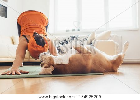 I always will be near with you. Beagle dog lies on the yoga mat when his owner makes yoga exercises