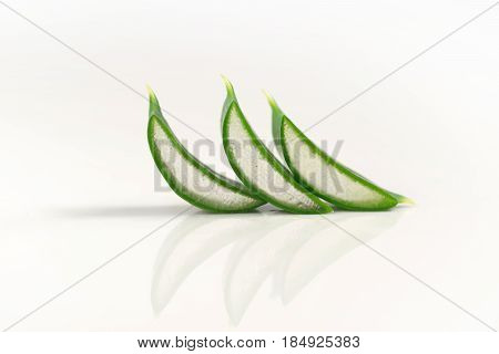 leaves of aloe on a white background