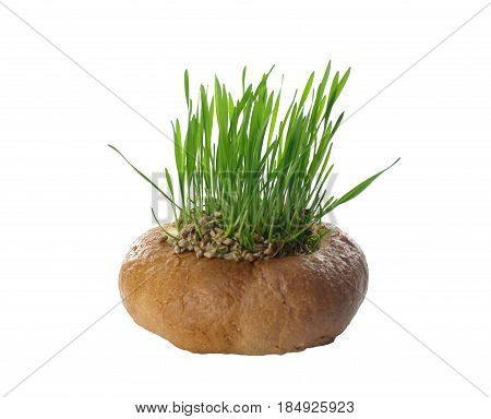round bread filled with growing cereal isolated