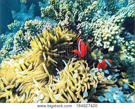 Tropical fish colorful digital illustration. Orange clownfish in yellow actinia. Cute clown fish underwater. Marine animal and plant. Coral reef ecosystem with exotic animal. Clownfish in nature