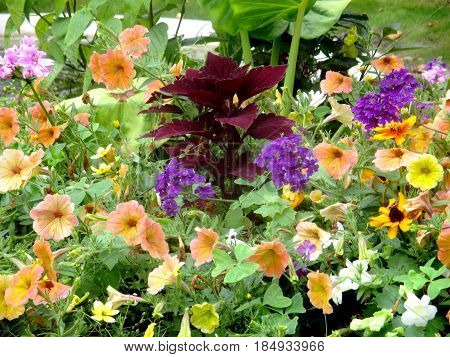 a view on a beautiful multicolored flowerbed
