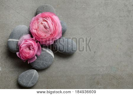 Two Pink ranunculus and pile of gray stone on gray background