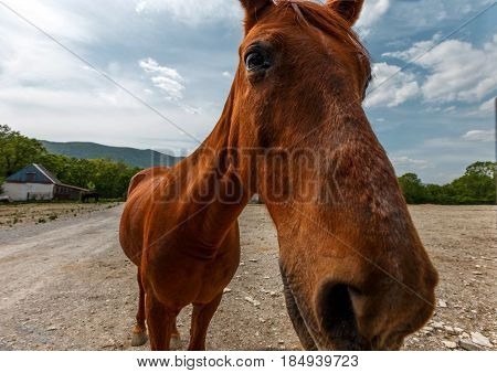A curious red horse buried his face in the camera