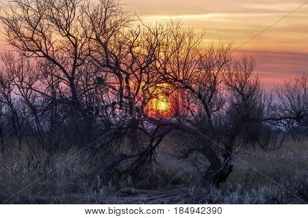Colorful sunset in early spring with curved trees
