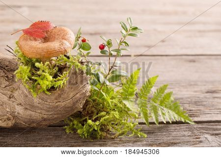 the mushroom and cowberry on wooden background