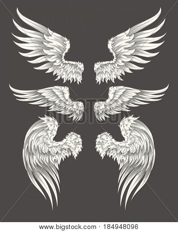 Set of vector illustrations of angelic or bird wings isolated on dark background, sketch, design element for tattoo