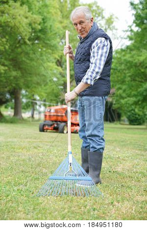 Senior man in garden cleaning lawn with rake