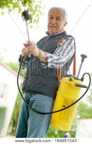 Senior man in garden spraying insecticide on trees and plants