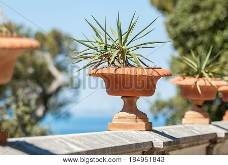 flower pots with smal palms staying along castle fence