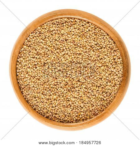 Crimson clover seeds in wooden bowl. Trifolium incarnatum, also known as Italian clover. Used for making protein-rich clover sprouts. Isolated macro food photo close up from above on white background.