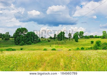 A path in the meadow on a summer day