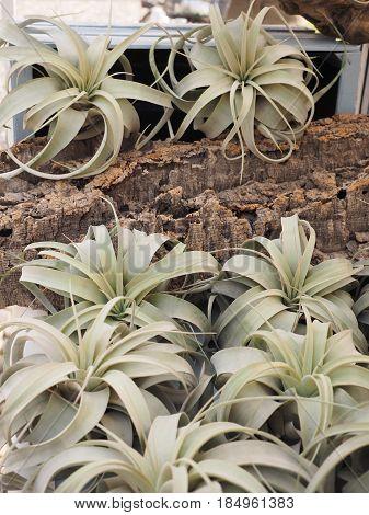 Epiphytes for sale at the flower market
