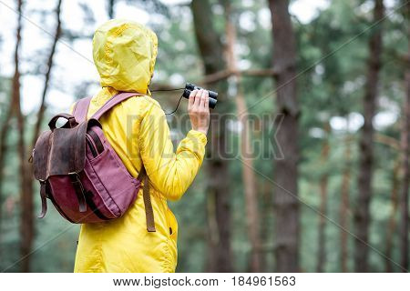 Young woman in yellow raincoat standing back with binoculars and backpack in the green pine forest. Bird watching in the forest