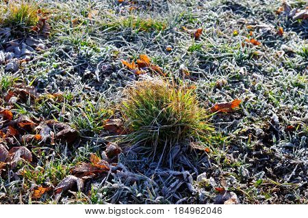 cluster of fresh grass on frozen grassland at the spring sunny morning