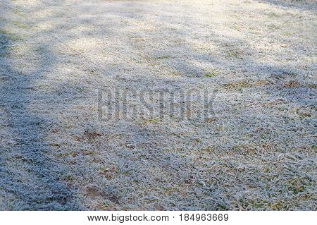 field of frozen grass at the sunny cold spring morning in perspective view