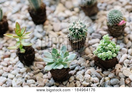 Home cacti on the stone ground