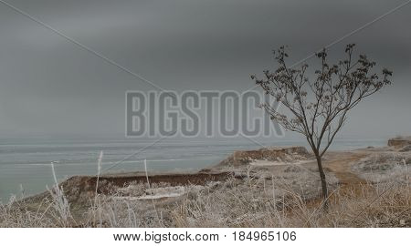 landscape of the sea coast with grass and trees covered with frost in the foreground and the deserted sea in the background in the winter on a cloudy day