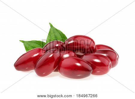 Red Berries Of Cornel Or Dogwood Isolated