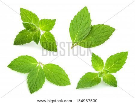 mint leaves isolated on white background. set
