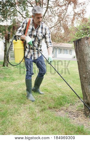 Man in garden spraying insecticide on trees
