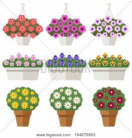 Vector set of different outdoor flowers in flowerpots: petunia pansy chrysanthemum. Isolated on white. Flat style.