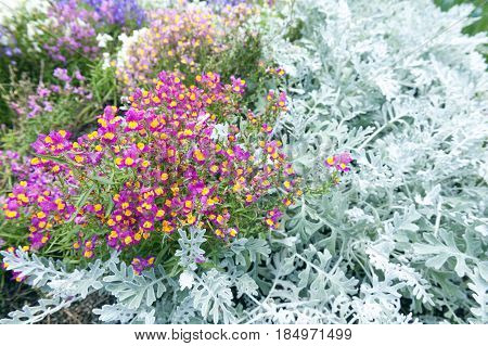 Beautiful Bright Pink And Yellow Flowers And Pale Green Leaves Decorating Plant Background