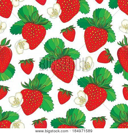 Vector seamless pattern with outline Strawberry. Red berry, flowers and green leaf on the white background. Floral background with Strawberry in contour style for summer design.