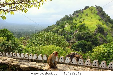 Famous Adams peak picture taken from Cave tempel in Dambulla Sri Lanka. Sitting Toque macaque in front