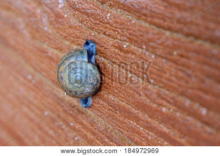 close up of snail slow walk on wall