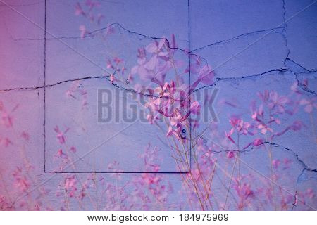 Pink lilac background surface photomontage of wall hatch and flowers.
